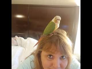My sons bird x2