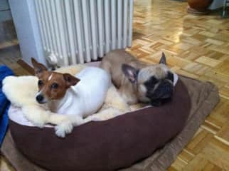 Lilly and her best friend, both unluckily not with me and my friend Patricia anymore