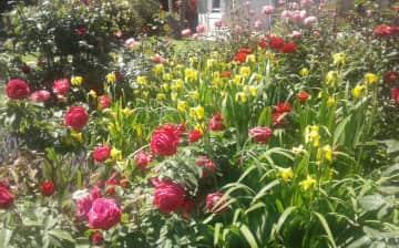 Our back garden in Summer