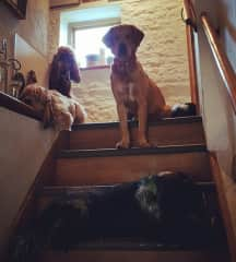 L to R: Teazle, Dylan, Willow, Boots (head), Smudge