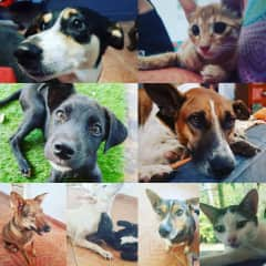 The Goa family! 6 dogs and 2 cats all rescue animals