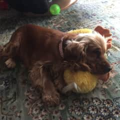 My favourite toy -duck duck