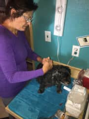 Suzanne giving insulin injection to our blind, diabetic dog, Duke. He passed away in October, 2018