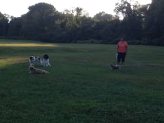 My dogs (up to three now) and a friend with her dog at the gorgeous local dog park.