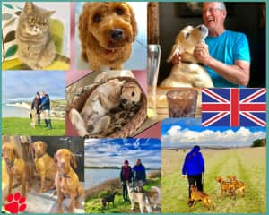 We have had so many beautiful experiences caring for loving pets in the UK