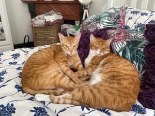 Ziggy & Mav having some snuggle time