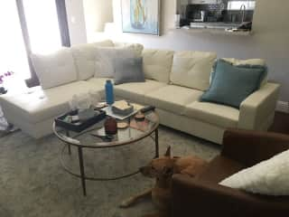 Living Room and Sasha