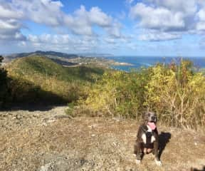 Coby atop Goat Hill on St. Croix