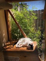 Snoo snoozing in her catio