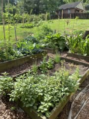 Some views of my garden