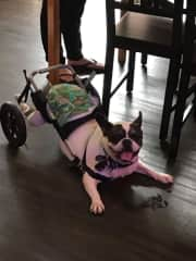 My name is Blackie. I am incontinent due to permanent spinal injury. My family kept me for years in the apartment balcony. And, when an operation to rectify my problem was unsuccessful