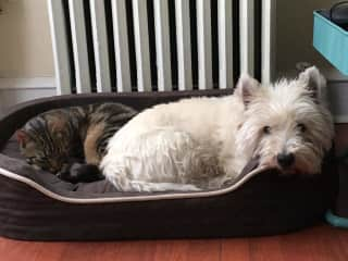 My friend's pets. Bailey (the Westie) lived with me for a couple of years.