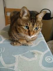 My cat Tora-chan.