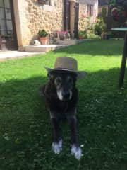 Sun protection is so important! House/pet sit 2018