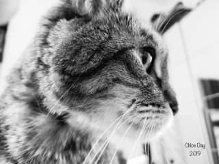 Chloe 18 year old kitty in England