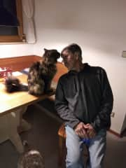 Sully  the Maine Coon in Germany