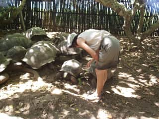 Dee with large tortoises