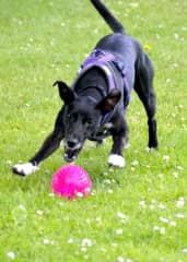 Jodi was very active and lots of fun in Edinburgh