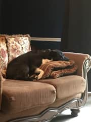 Sleepy baby - yes, he's allowed on the couches!