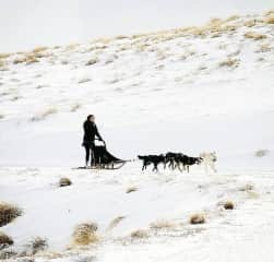 Dog sledding in New Zealand