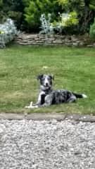 Ziggy the Canterbury Pup