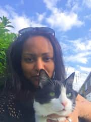 With Simao in Westport, no other cat has loved Dreamies more!