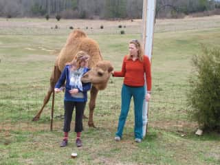 Me (on left) and a friend visiting Mel the camel in TN.