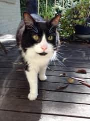 Cosmo, the gorgeous old gentleman. Sydney, Australia