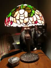 Jasper too big to fit under the lamp anymore