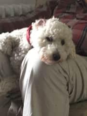 Sid loves cuddles