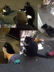 A collage of our Grandcat Meo