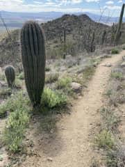Saguaro National Park hike