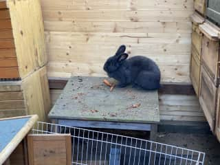 And we've cared for three rabbits too. Germany 2020