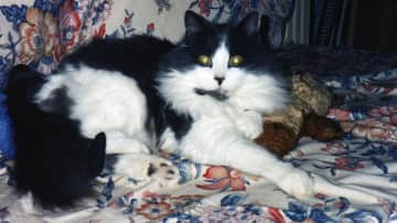"""my last and best-loved cat Agus ( means """"and"""" in Gaelic )    with his teddy bear."""