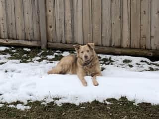Odin is a big fan of Chicago winters!