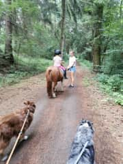 A friend has a little farm with a lot of different animals.  Dogs, cats, horses, donkeys, mules, ducks, chickens, much different kinds of birds, rabbits, guinea pigs, sheep's, llamas... Its like a holiday. (That´s in Germany 2020)