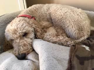 Teddy naps