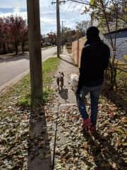 Ali walking our friend's dogs in 2018.