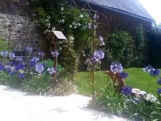 the garden this summer