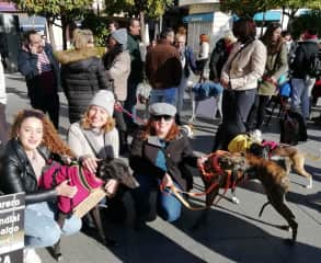 with friends from the greyhound protection association that I volunteer for - Galgos del Sur