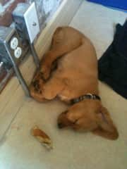 Ezra as a pup again