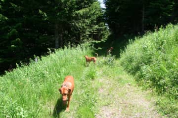 Copper and Baxter hiking in Rila Mountains Bulgaria.