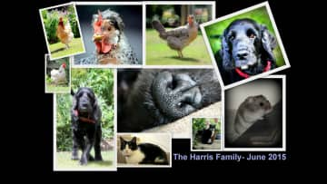 Birmingham family - Nelson, Dora, Rex, Kitty, DJ & the ladies - June 2015