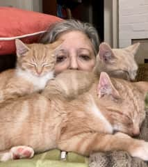 Litter of foster kittens!