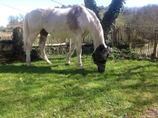 Smudge enjoying some grass in the garden