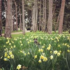 Dolly enjoying springtime in the park