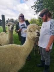 Best day ever at alpaca farm :D