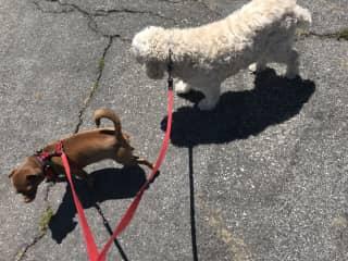 Gizmo and Stella !❤️