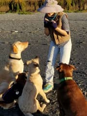 Gaining attention and trust with 4 assorted K9s