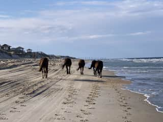 Wild Mustangs usually sited on our walks! So gentle!